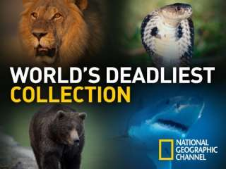air date: December 03, 2010 Network: National Geographic Channel