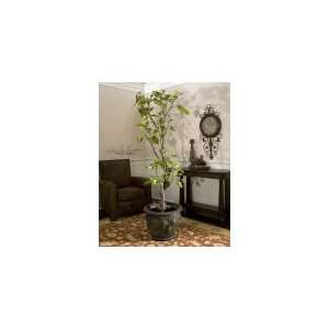 Jordan Valley, Fig Tree by Uttermost   Plump Figs From Light Green