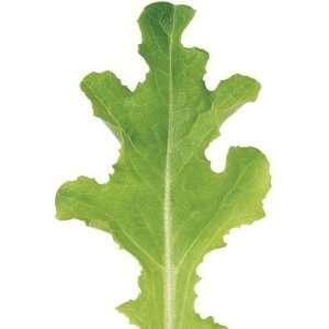 Davids Red/Green Non Hybrid Lettuce Sulu 200 Seeds per