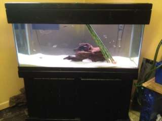 Fish tank aquarium 40 gallon long with stand 2 filters 1 for 40 gallon fish tank stand