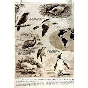 1951 BIRDS HELMET SHRIKE PHEASANT GILBERTI PICATHARTES