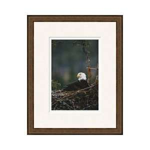 American Bald Eagle Homer Alaska Framed Giclee Print