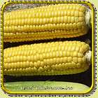 Lb   Early Xtra Sweet   Bulk Yellow Hybrid Sweet Corn Seeds