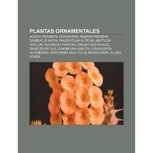 Plantas ornamentales: Acacia dealbata, Cannaceae, Agapanthoideae