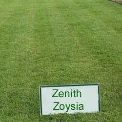 Zenith Zoysia Grass Seed   1 LB Patio, Lawn & Garden