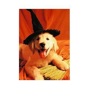 Golden in Witch Hat Halloween Card  Toys & Games