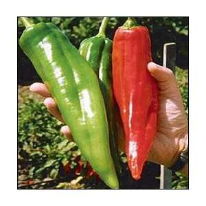 NuMex Big Jim Chile Pepper 10 + Seeds   12 Inches Long